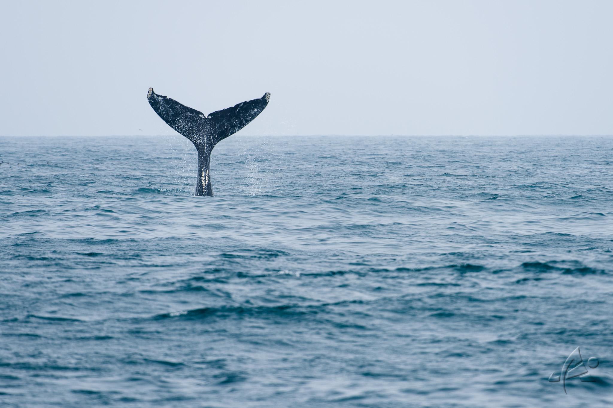 20140726 Whale wathing Monterey 196